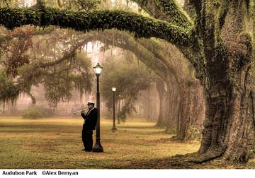 Audubon Park Photograph by Alex Demyan
